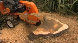 Stump Grinding and Tree Stump Removal Solihull by Tree Surgeon Solihull