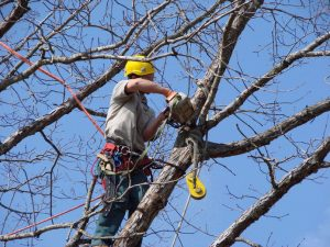 Tree Pruning and Tree Clearing Solihull by Tree Surgeon Solihull